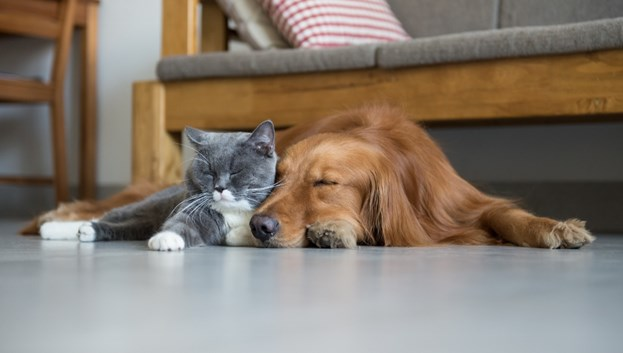 Pet-Friendly Flooring & Care For Your Home