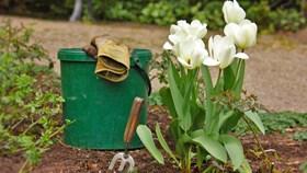 Gardening Tools Every Homeowner Needs