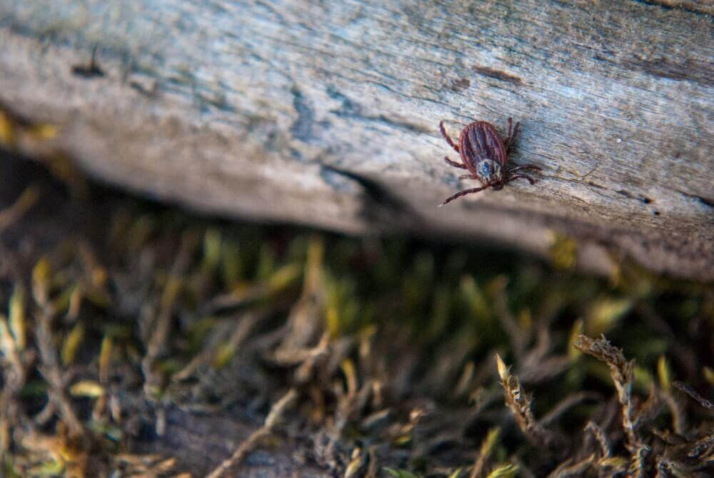 Backyard Pests keeping your yard pest free | bug free backyard