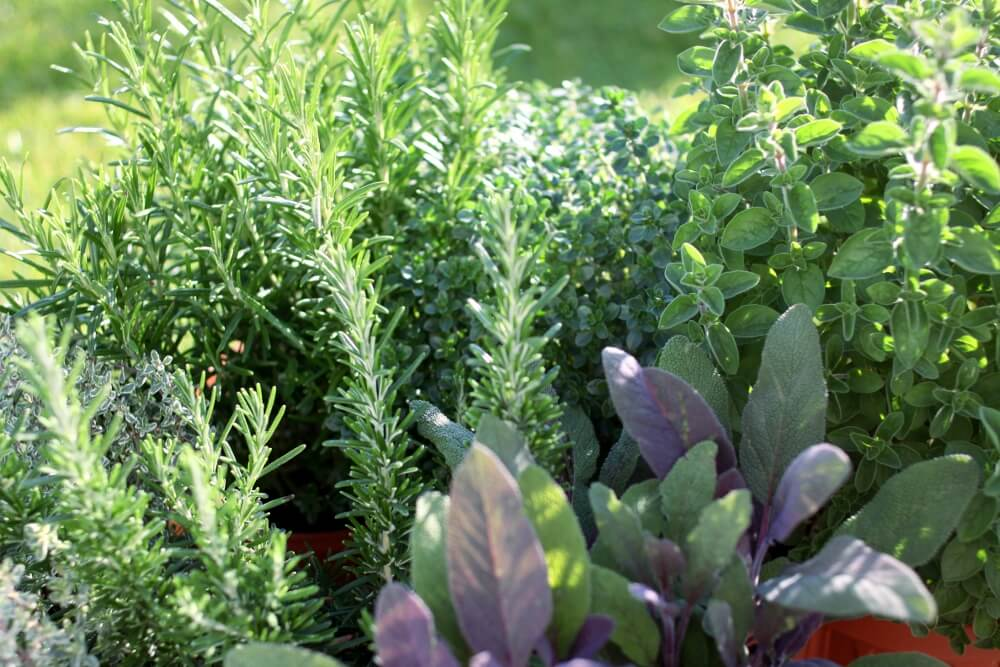 How To Control Pests In Your Garden Pest Control
