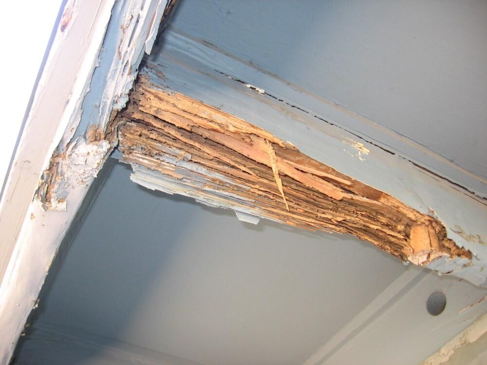 2020 Termite Control Service Cost Termite Treatment Cost