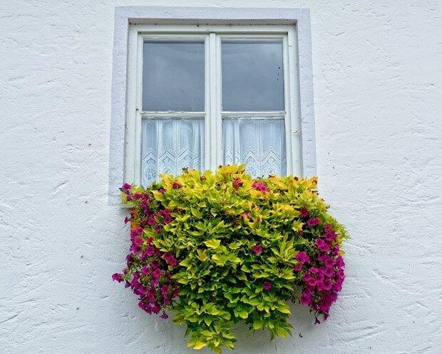 6 Hanging Flower Pot Plant Ideas