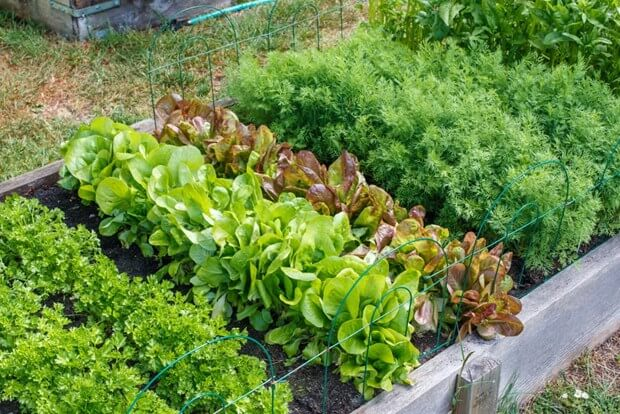 How To Start A Garden Starting, Back Yard Gardens