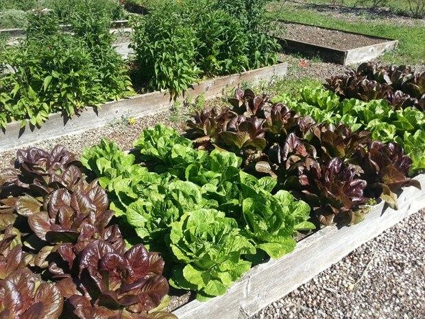 Improve Your Vegetable Garden This Season