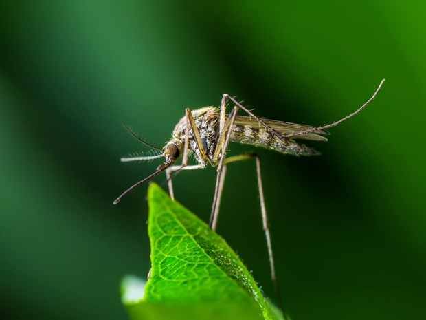 Reduce Mosquitoes In Your Backyard