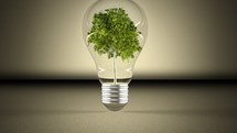Going Green: How To Make The Switch Over