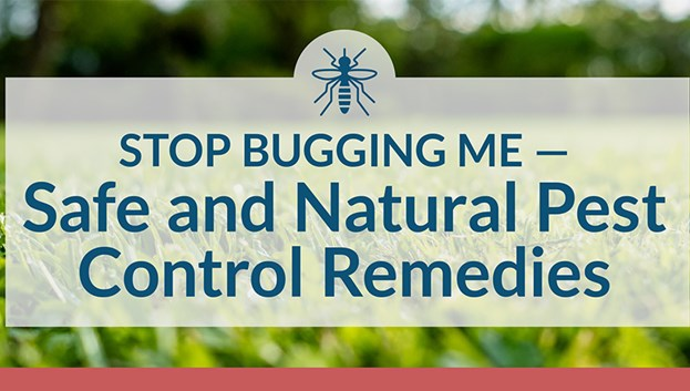 Stop Bugging Me: A Guide To Safe & Natural Pest Control Remedies