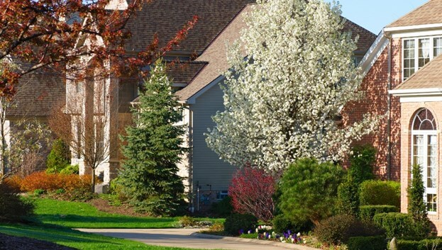 Why You Should Add Trees To Your Yard