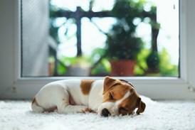 Pets Vs Carpet Keep Floors Looking Great