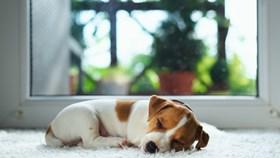 Pets Vs. Carpet: Keep Floors Looking Great