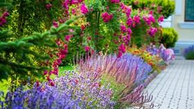 2018 Landscaping & Garden Trends