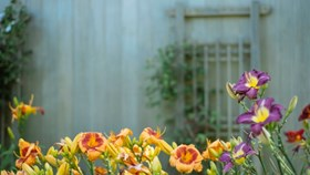 Choosing The Right Flowers For Your Garden