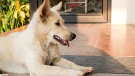 7 Ideas To Help Your Dog & Landscape Live In Harmony
