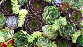 How To Plant Succulents Outside