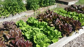 Improve Your Vegetable Garden This Season