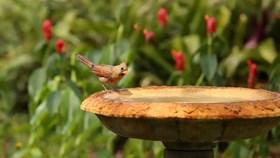 The Young Birder's Backyard Guide
