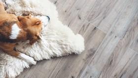 2019 Flooring Trends