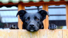 The Best Backyard Fence For Dogs