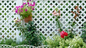 Vinyl Fence Possibilities