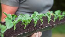 How To Create A Gutter Garden