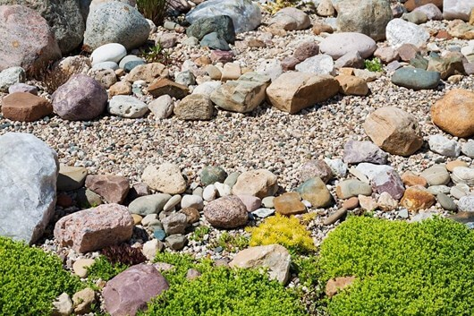 Rock Garden Ideas Garden Rocks Garden Rock Plants