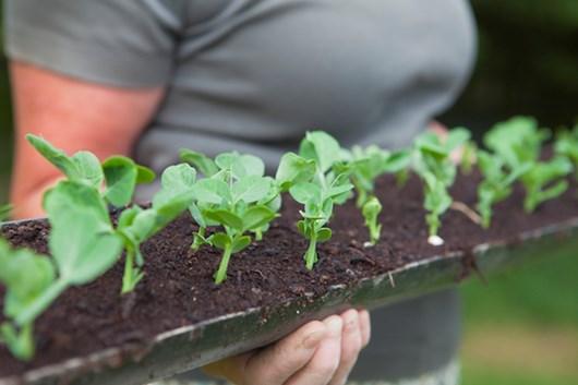 How To Create A Gutter Garden | Rain Gutter Garden