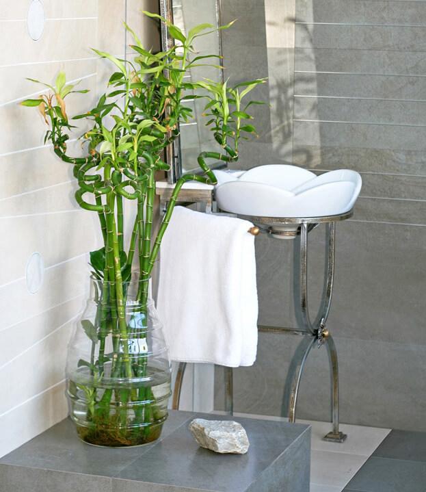 4 easy to care for indoor houseplants easy houseplants for Plantas en casa segun feng shui