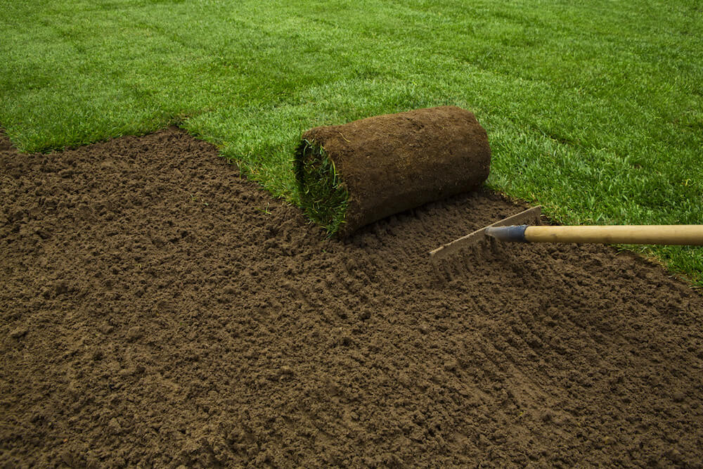 Benefits Of Using Bermuda Sod Vs Lawn Turf