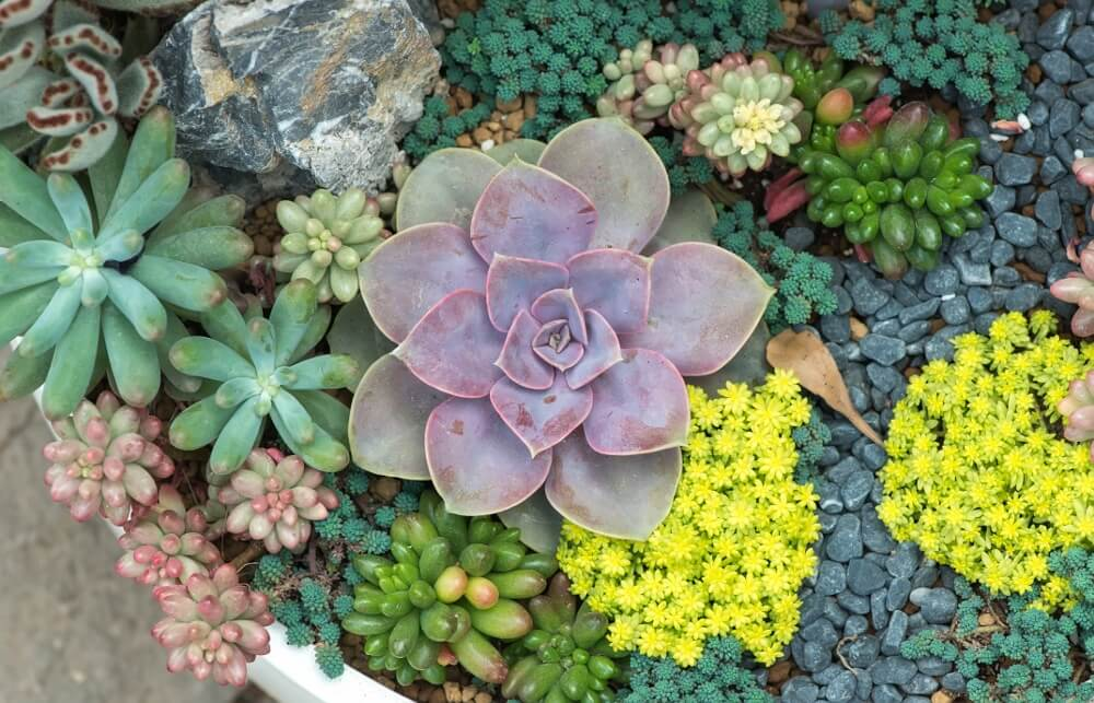 How To Plant Succulents Outside Gardening Tips Succulent Garden